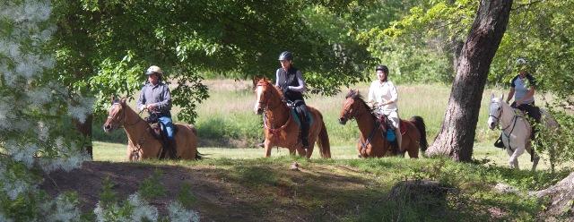 Biltmore Challenge 30/50/75 Endurance, Asheville, NC @ Biltmore Equestrian Center