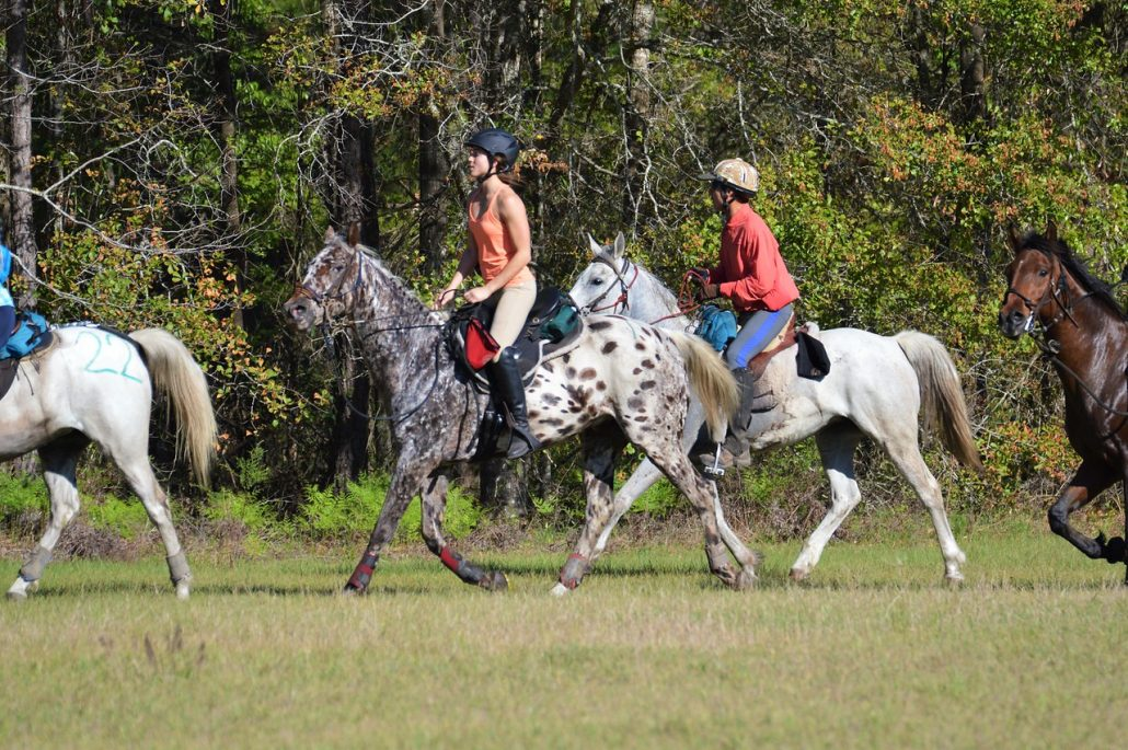 Breed Incentive Programs - South Eastern Distance Riders